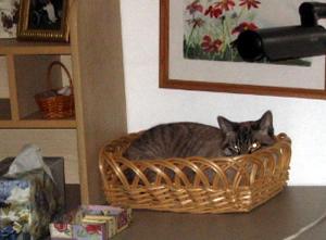 cat_in_basket.jpg