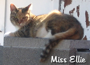 Miss Ellie on our brick wall circa 2004